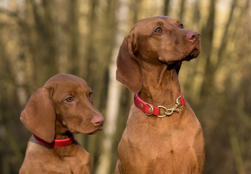 Burgerbelangen kraakt boswebinar Hond & Natuur: 'Het lijkt erop dat de hondenzonering allang vaststaat'
